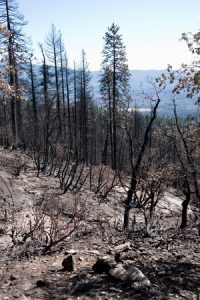 Ventilation Solutions for Homes Affected By Wildfires